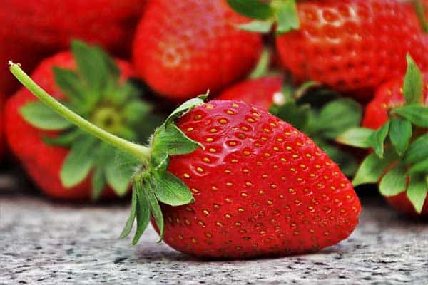 Can Eating Strawberries Give Cats An Upset Stomach?