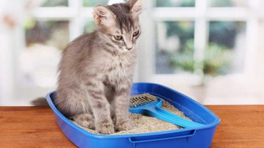 best dust free cat litters