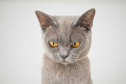 stoner cat names