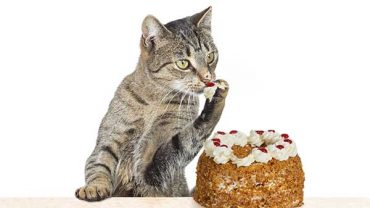 is cake bad for cats