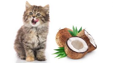 can cats have coconut