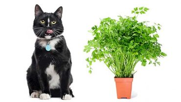 is parsley safe for cats?
