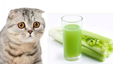 can cats eat celery sticks?
