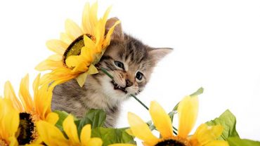 sunflower seeds for cats
