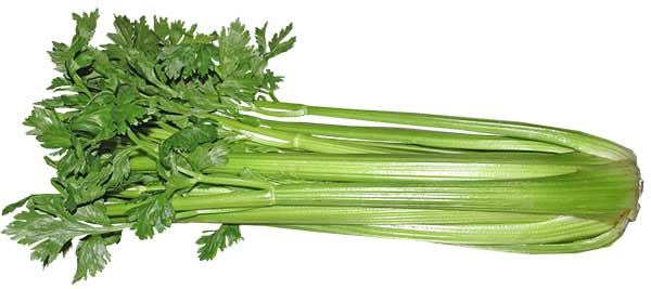 can cats eta raw celery?
