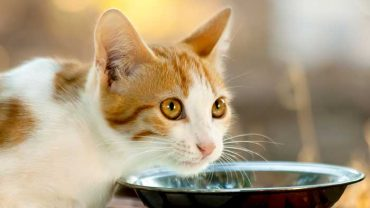 is almond milk safe for cats?