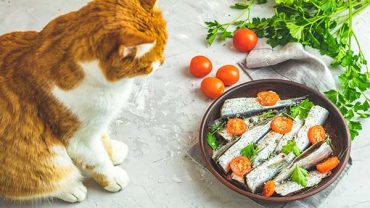 are sardines safe for cats?