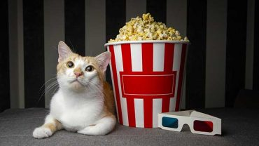 popcorn for cats