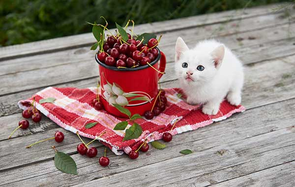 kitten with cherries
