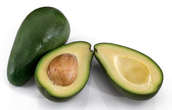 is avocado good for cats?