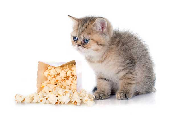 is popcorn toxic to cats?