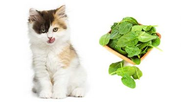 cats and spinach