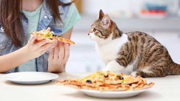 Is Pizza Safe For Cats?