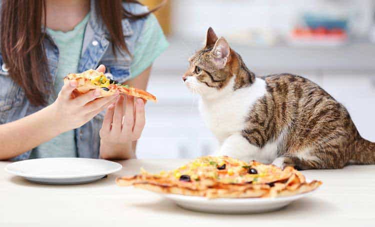 can cats eat pizza or will they get sick