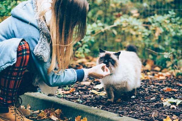 girl feeding a siamese cat