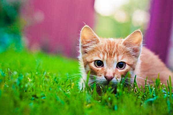 young kitten hunting on green grass
