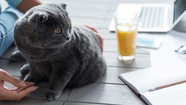 can cats drink orange juice?