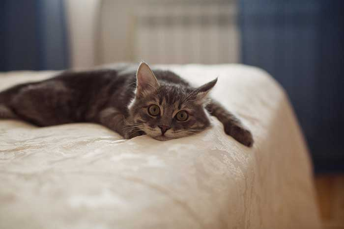 young cat on bed