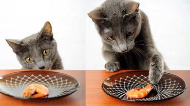 Is Shrimp Bad For Cats?