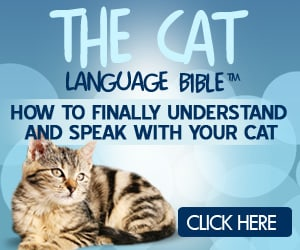 The Cat Language Bible