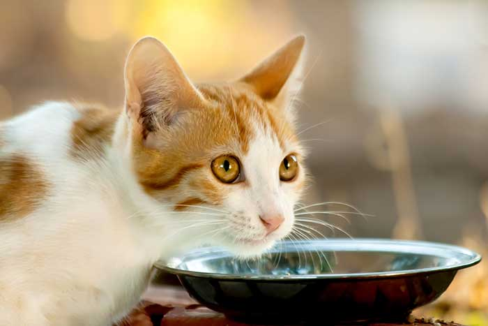 cute cat eating food