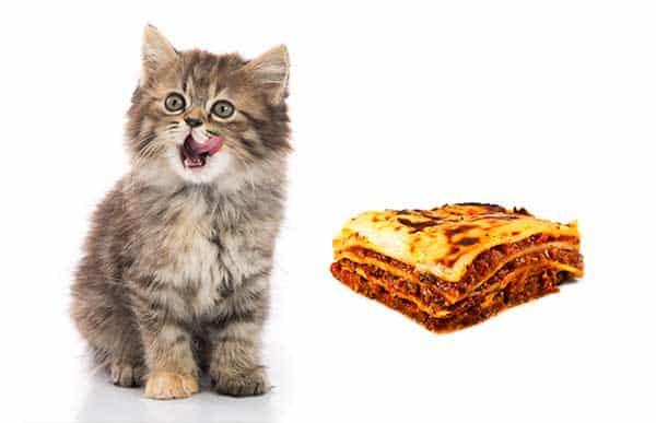 Can Cats Eat Lasagna?