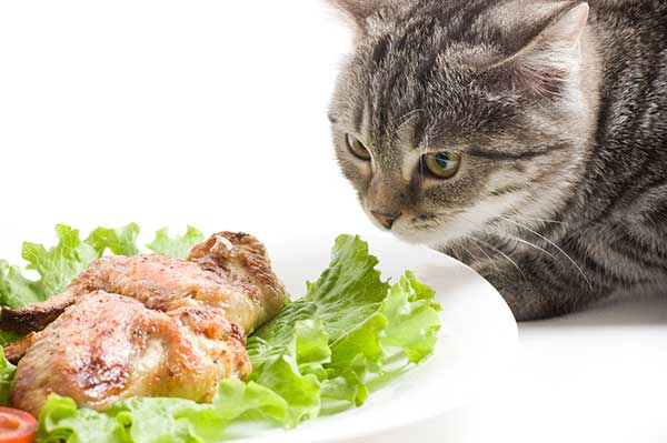 can cats eat raw lettuce?