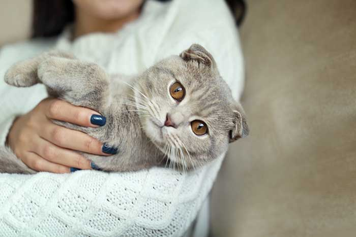 women holding her gray cute cat