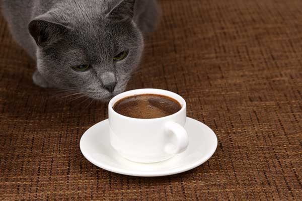 will coffee kill a cat?