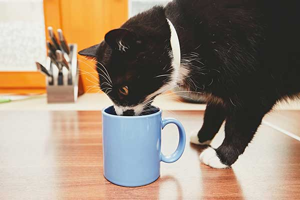 Is it okay for cats to drink tea?