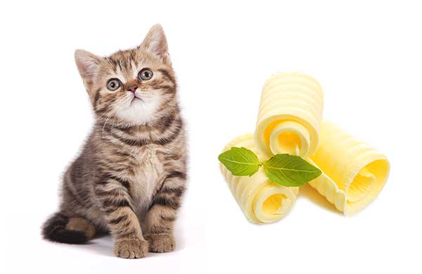 Can I Give My Cat Butter?