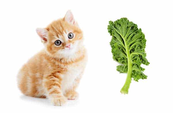 Is Kale Safe for Cats?