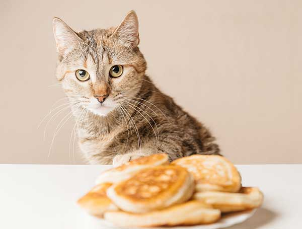 can cats eat pancakes?