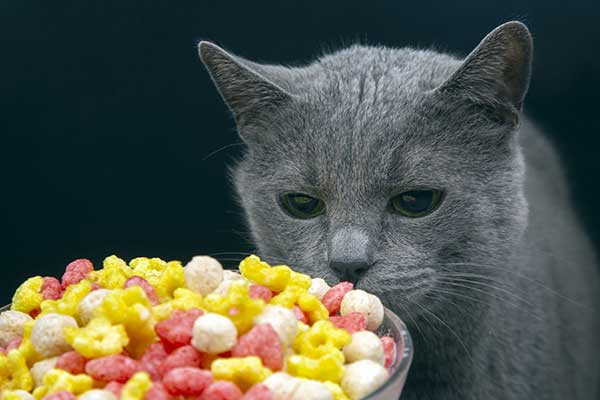 Is it okay for cats to eat cereal?