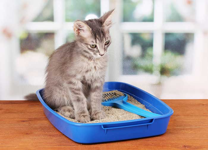 cat piing in his litter box