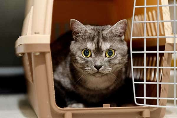 tips to get your cat into a carrier