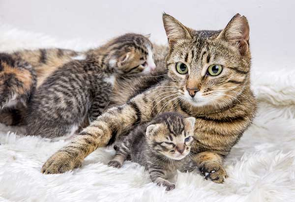adorable kitten with their mother