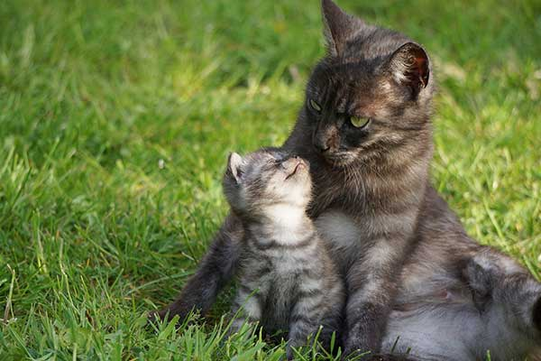 cute kitten with his mother