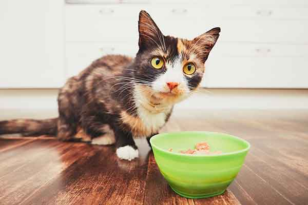 Can Cats Eat Spicy Food?