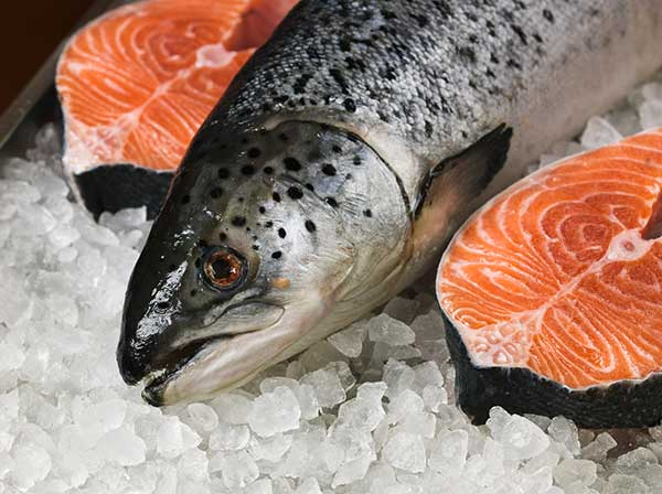 Can Cats Eat Fresh Salmon?