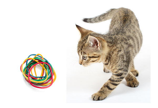 Can Cats Eat Rubber Band?