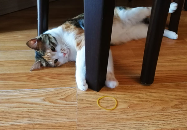 My Cat Ate A Rubber Band
