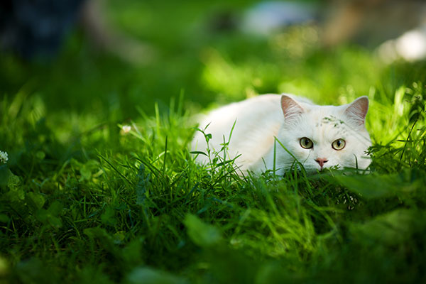 Are Moths Safe For Cats To Eat?