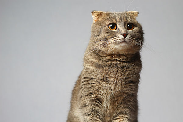 How long can a cat hold his poop?