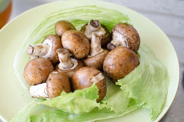 Are Mushrooms Bad for Cats?