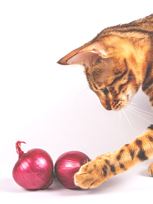 are onions bad for cats?