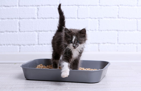 Is it normal for a cat not to poop every day?