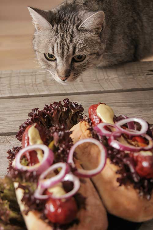 how do I know if my cat ate an onion?