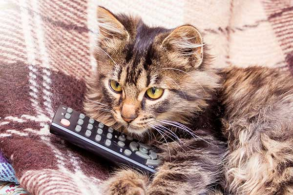 Can Cats Watch TV?