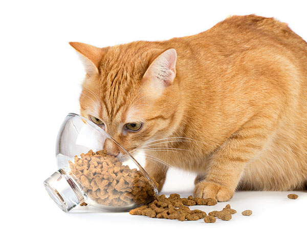 Why Does My Cat Throw His Food on the Floor?